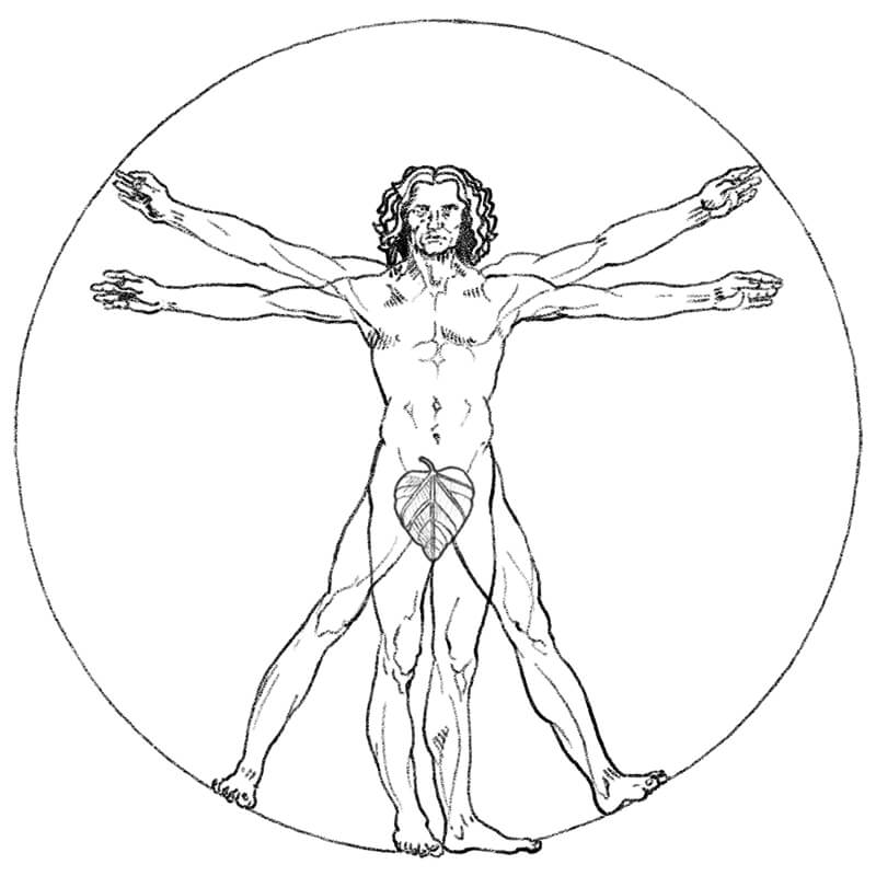 Illustrated DaVinci man